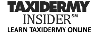 Taxidermy Insider